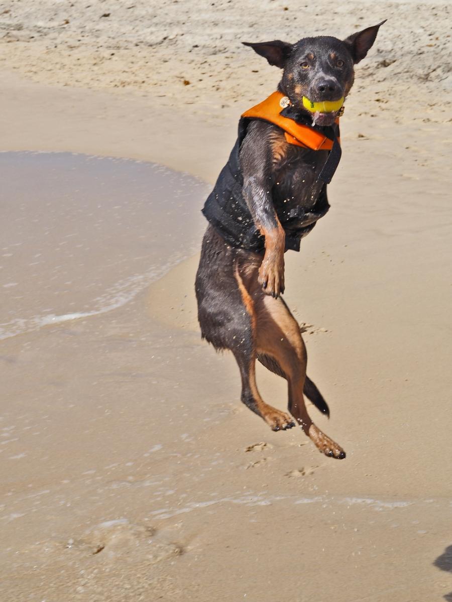 Ash_Dog_Beach_0071_web