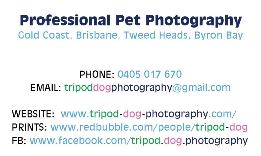 Tripod_Dog_photography_Business-Card2